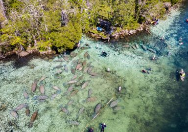 Crystal River, Florida, United States